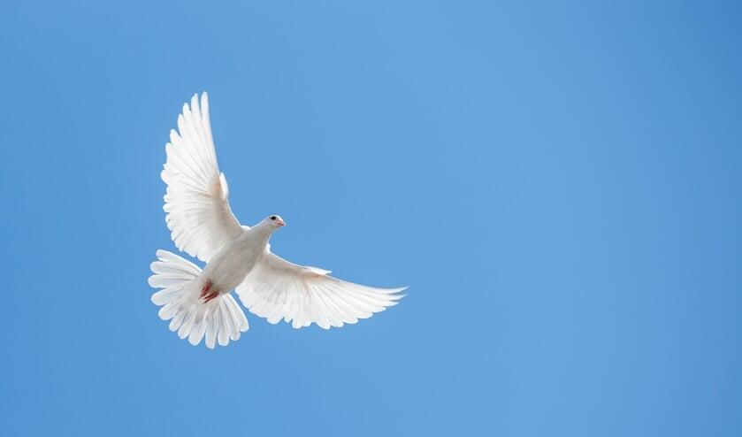 <p>Op 21 september zijn er weer diverse activiteiten in de regio in het kader van de Internationale Dag van de Vrede. Zo ook in Enschede.</p>