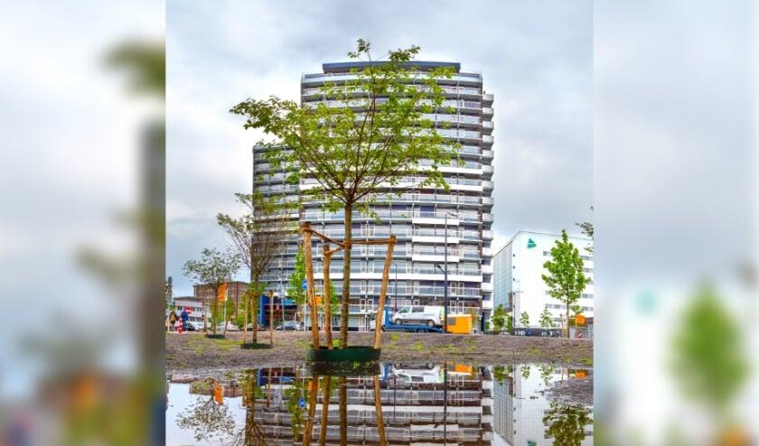 <p>De Haaksbergerstraat wordt groener. (Foto: gemeente Enschede)</p>