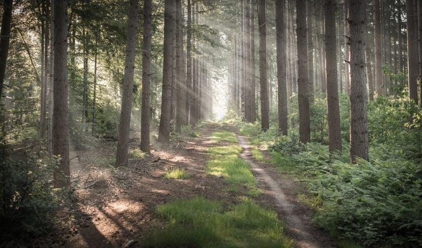<p>Over woorden mijmeren en onderzoeken wat ze jou willen zeggen of gewoon op pad om in de stilte de natuur beter te kunnen zien, ruiken en horen. </p>