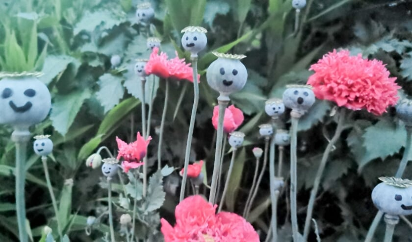 <p>Tuin Beckelo houdt zondag een open dag. Daar word je vrolijk van. Tuinliefhebbers kunnen regelmatig genieten van de mooiste bloemen en planten in elk jaargetijde.&nbsp;</p>
