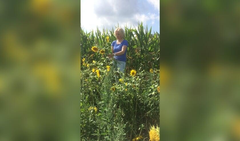 <p>Voor een vrijwillige bijdrage 10 zonnebloemen plukken; u geniet van de prachtige bloemen en steunt met uw bijdrage ook inlooppunt De Open Deur.</p>