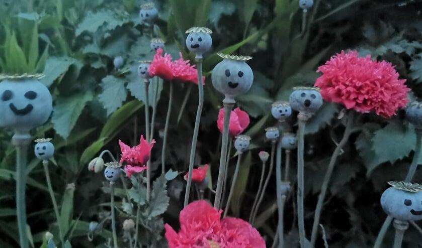 <p>Glimlachende papaverbollen zijn er ook in Tuin Beckelo.&nbsp;</p>
