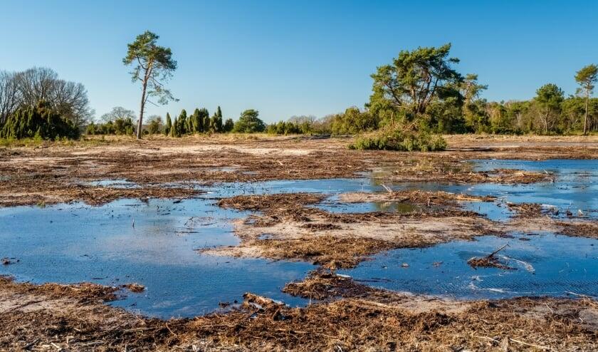 <p>Het Buurserzand. Wateraanvoer en retentie in de regio is belangrijk voor de drinkwatervoorziening en voor behoud van kwetsbare natuur.</p>