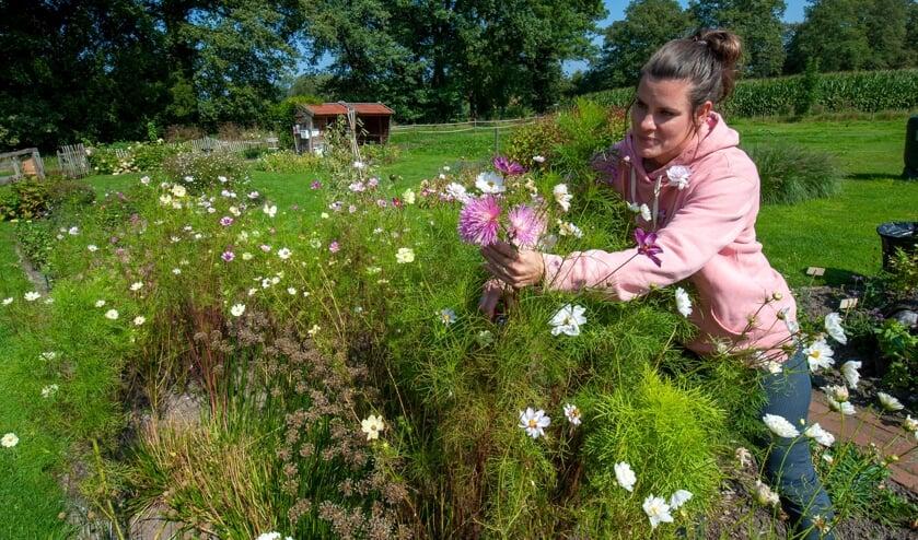 <p>Mirthe Koetse plukt bloemen in de Inspiratiehoeve. (Foto: Robert Hoetink)</p>
