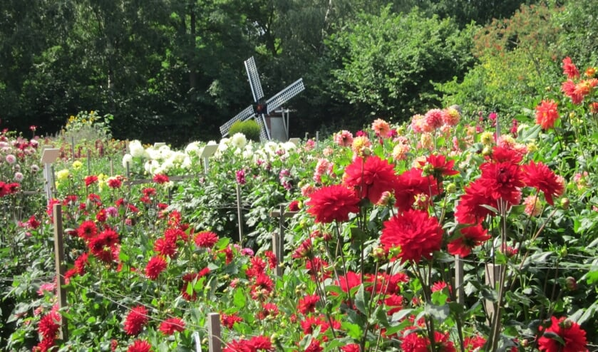 <p>De open dagen bij Bloemenvereniging Floralia zijn iets afgeslankt, maar daarom niet minder gezellig! Kom ook komend weekend.</p>