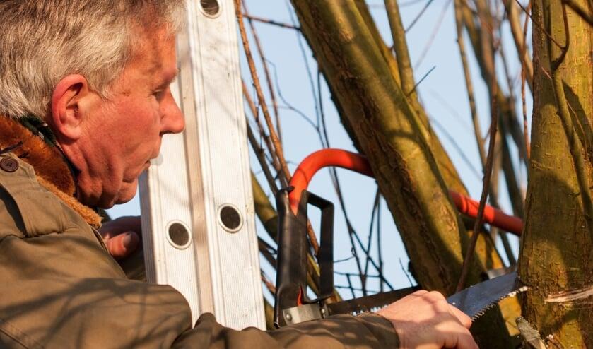 <p>Leer hoe u een boom veilig omzaagt en daar laat landen waar u dat graag wilt tijdens de workshop vel- en zaagtechnieken.&nbsp;</p>