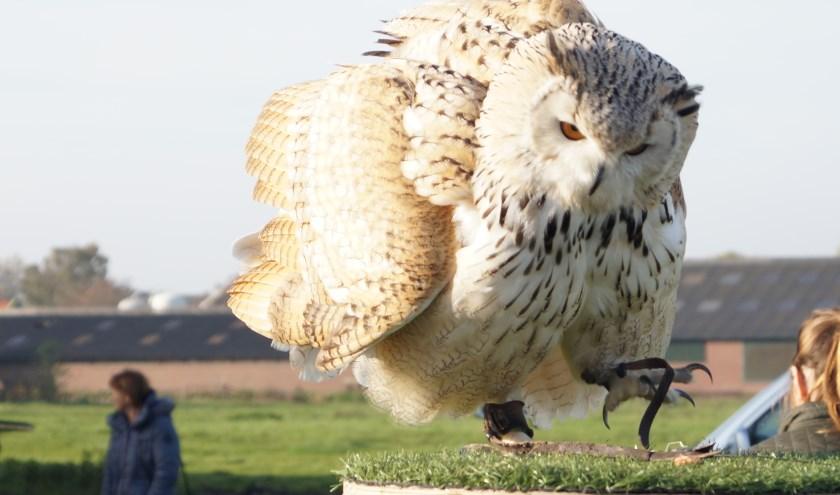 Hunters of the Sky geven twee keer hun roofvogeldemonstratie tijdens de Piet Bakker Buitendag. Foto: Hunters of the Sky