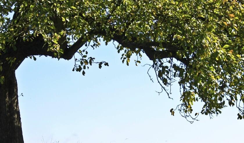 <p>Bomen.</p>
