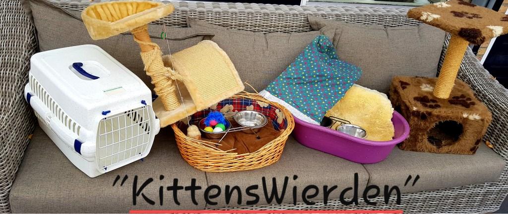 De cadeautje die Jolanda van mevrouw B. heeft gekregen. Foto: Kittens Wierden © DPG Media