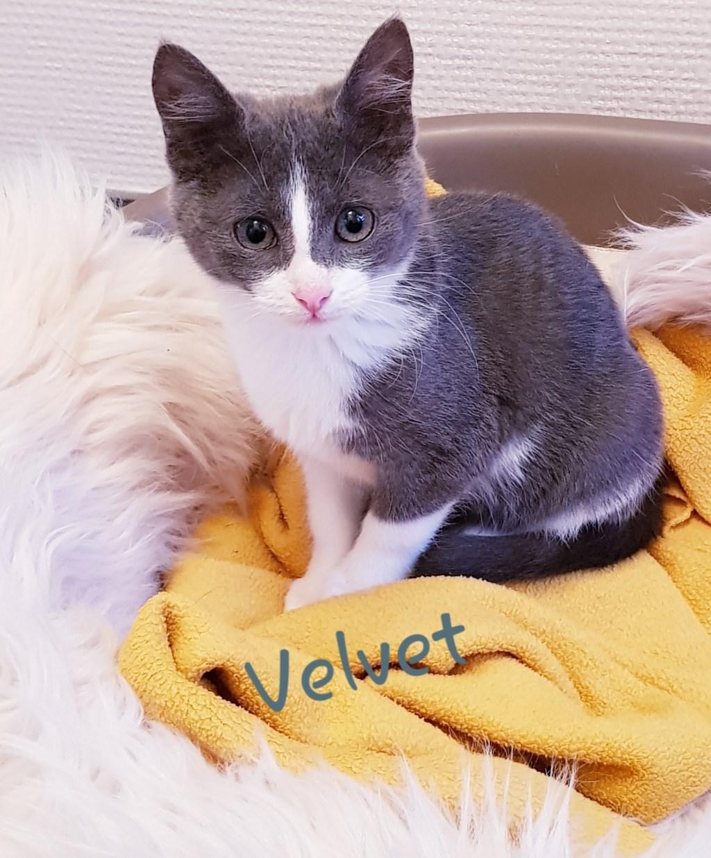 Velvet. Foto: Kittens Wierden © DPG Media