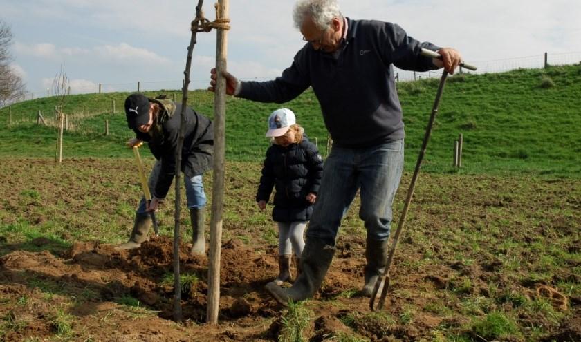 Aanplant van een fruitboom.