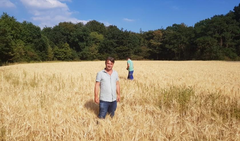 Marcel van Silfhout vlak voordat het graan op de Westberg geoogst wordt. (foto: Kees Stap)