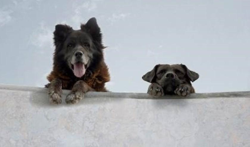 Los Reyes is het oudste skatepark van de Chileense stad Santiago. Twee zwerfhonden maken van deze lawaaige ruimte hun thuis.