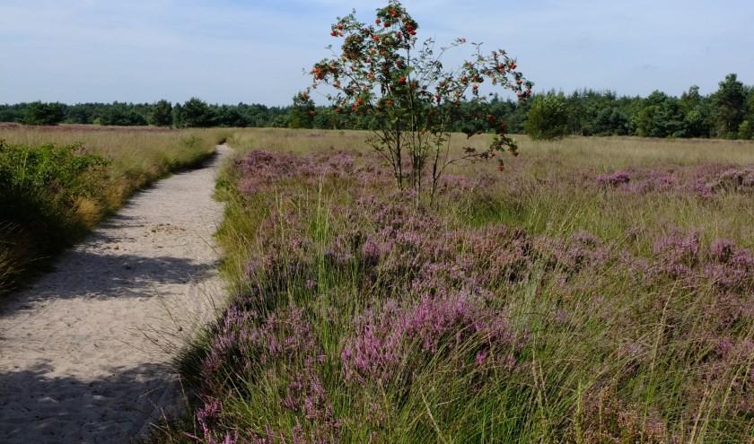 Zet je in voor het beschermen en behouden van amfibieën en reptielen op de Rucphense Heide. Foto: NatuurWerkgroep.