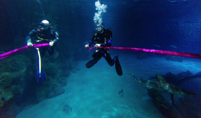 Duikers knippen het lint door tussen de haaien in het haaienbassin.