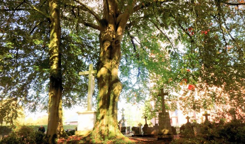 Eddy komt tijdens zijn wandeling in en rond Saasveld ook langs het kerkhof. Het kerkhof ligt er aangeharkt bij.
