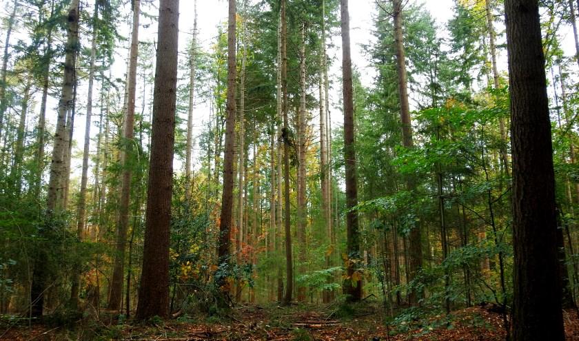 Altijd  weer  genieten  als  ik met  mijn  camera  door  het  bos  wandel