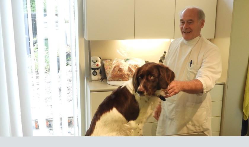 Dierenarts Lette op zijn laatste dag als dierenarts voordat hij met pensioen ging. Op de behandeltafel zit een Drentsche Patrijshond.