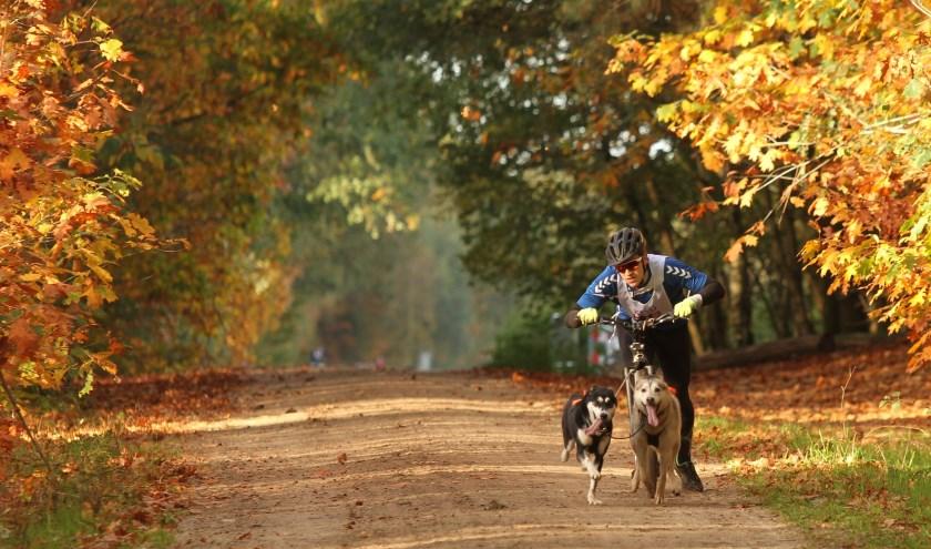 Honden en baasjes genieten van sledehondensport in herfstachtig decor. (Foto: Ad Adriaans).