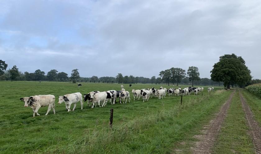 """""""Wij moeten straks veel vergunningen aanvragen om vee op twintig plekken in de Gemeente te kunnen weiden,"""" aldus Jos Kosters. (Eigen foto)"""