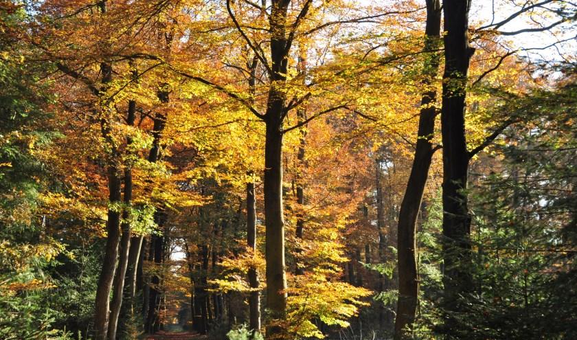Bomen laten hun prachtige herfsttooi weer zien, wat prachtige plaatjes oplevert.