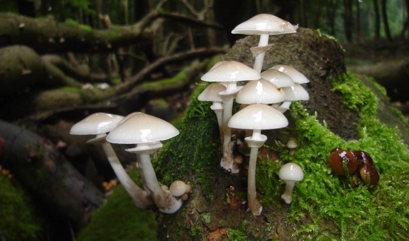 In de herstvakantie op zoek naar paddenstoelen