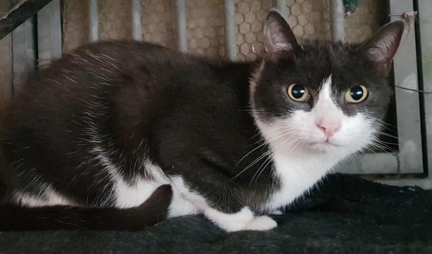 Elke week zet Dierenopvangtehuis De Bommelerwaard een dier in het zonnetje. Deze week is dat Merlin. Kijk voor meer informatie op www.dierenasiel-bommelerwaard.nl.