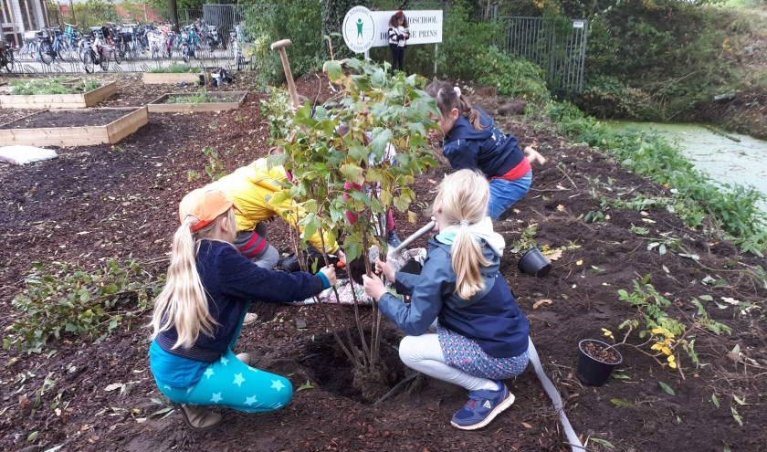 kinderen van de Patio planten een bessenstruik