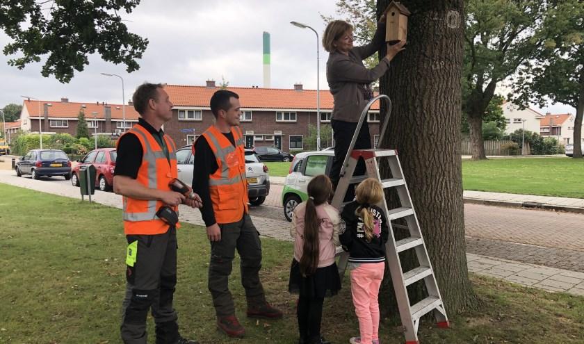 De gemeente wil met koolmezen de strijd tegen de eikenprocessierups winnen. (Foto gem.Zwijndrecht)