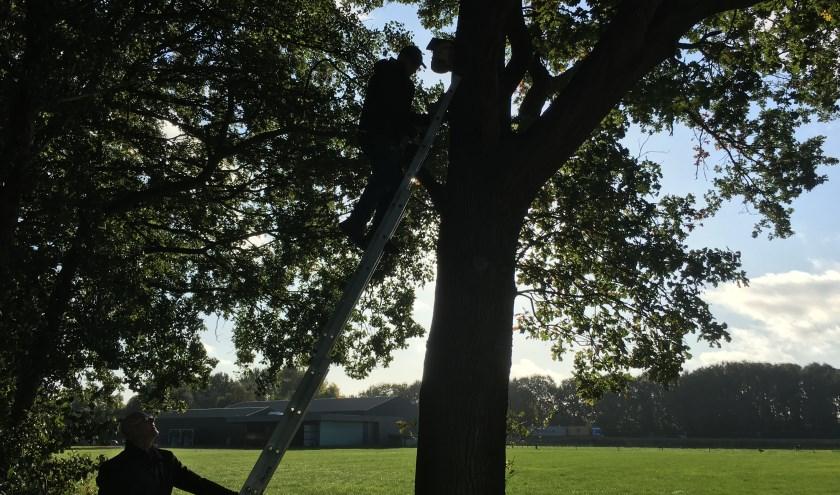 Nestkasten ophangen met de Natuurfederatie Geertruidenberg. (foto: Judith Prakke)