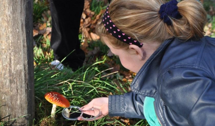 Op 13 oktober is het zover: dan kun je paddenstoelen bekijken op Nieuw Rande bij Diepenveen. (foto IVN)