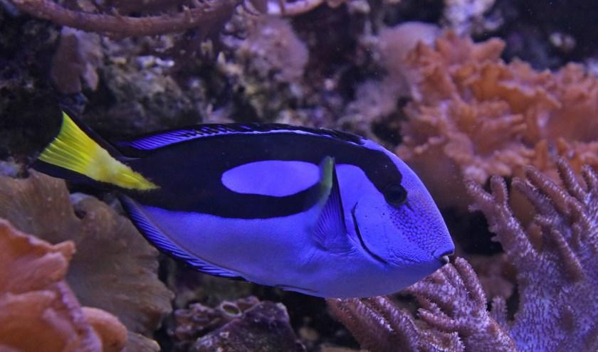 Aqua Zoo-Leerdam is een perfect vakantie-uitje, zéker als het regent.