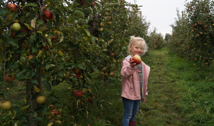 Familie Kysela uit Rosmalen kwam ook zelf appels plukken op de Bommelse Appeldag. Je kunt nog tot en met 26 oktober appels plukken in de boomgaard.