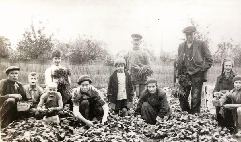 oor het plukken van de aardbeien werd de hele familie ingeschakeld. Op deze foto de familie Van Nugteren omstreeks 1920. Collectie Historische Vereniging Zwijndrecht.