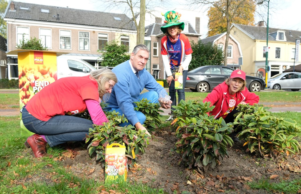 Burgemeester Frits Naafs plant bollen bij het Cultuurhuis in Doorn op Wereld Polio Dag, samen met enkele leden van Rotary.  © DPG Media