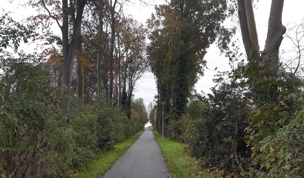 Speeltuinpad met aan weerszijden veel zieke en dode bomen: een groot veiligheidsrisico. Foto:  © DPG Media