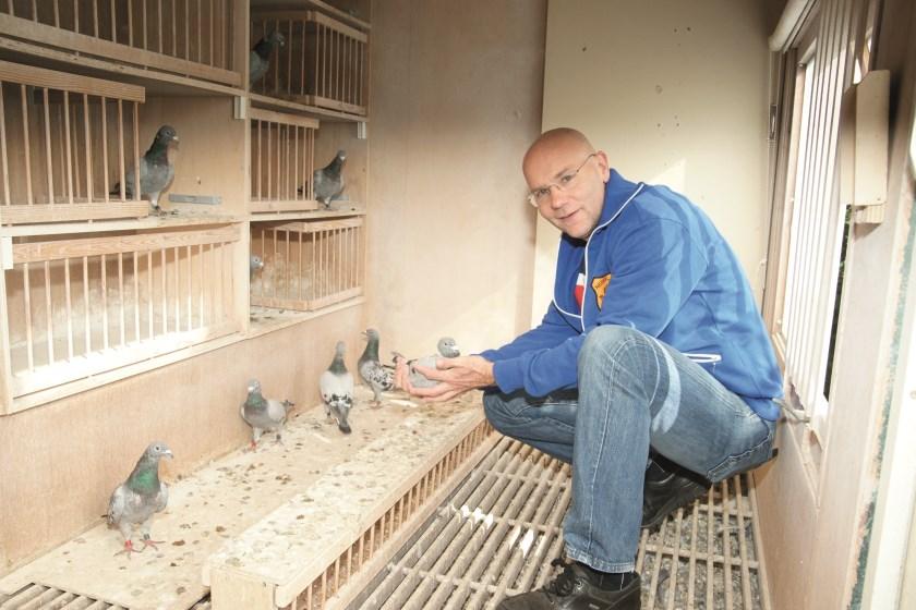 Peter Pennekamp in het hok bij zijn duiven.