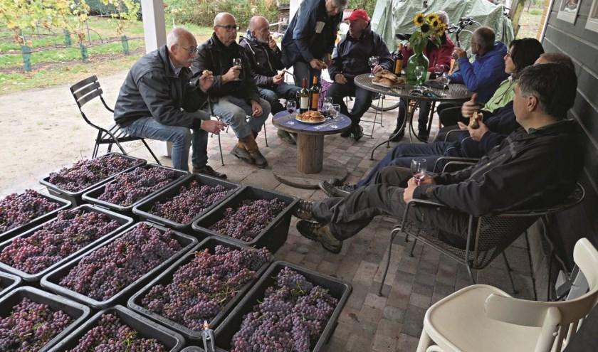 In de wijngaard wordt alles in orde gemaakt voor het nieuwe seizoen en in februari begint de wintersnoei.