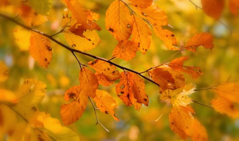 herfstbladeren.