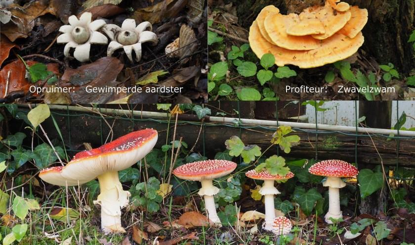 Drie verschillende paddenstoelen die je tegen kunt komen in deze tijd van het jaar.