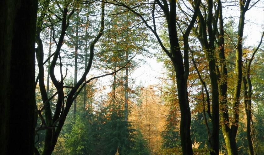 Herfst in het Leuvenumse bos.