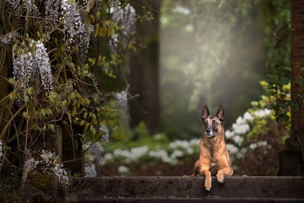 Een van de foto's uit de serie Foto: Brenda Beumer © DPG Media