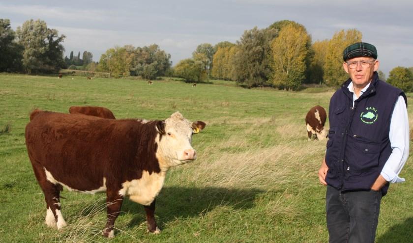 Gerard MacLeane: ''De inzet van Herford runderen in de Heesseltse uiterwaarden is een vorm van economisch duurzame landbouw.''