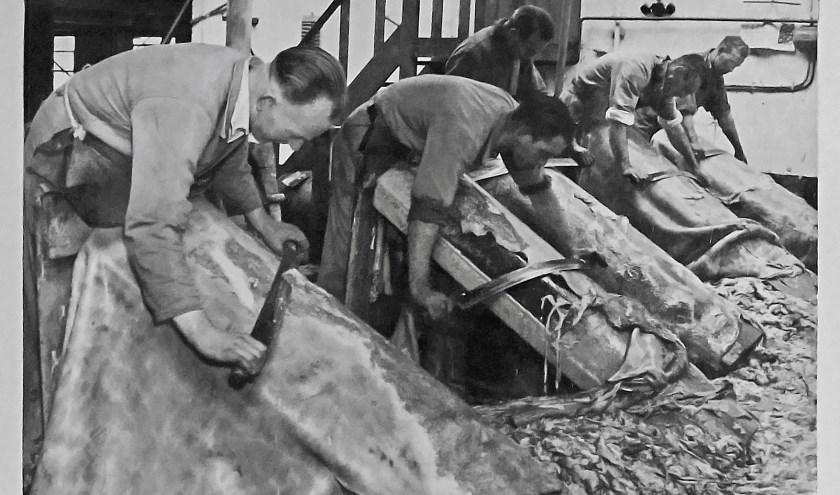 Het handmatig ontvlezen van huiden in de leerlooierij van Van Wagenberg-Festen was een zwaar en nauwkeurig werk. Foto: Collectie HKK Onsenoort