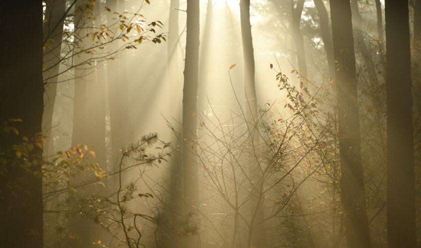 Zonneharpen in het bos.