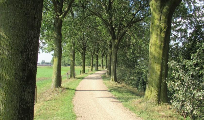 GroenLinks Heusden wil dat de prachtige, gezonde bomen op de Zeedijk tussen Elshout en Doeveren bij een renovatie van het fietspad behouden blijven.