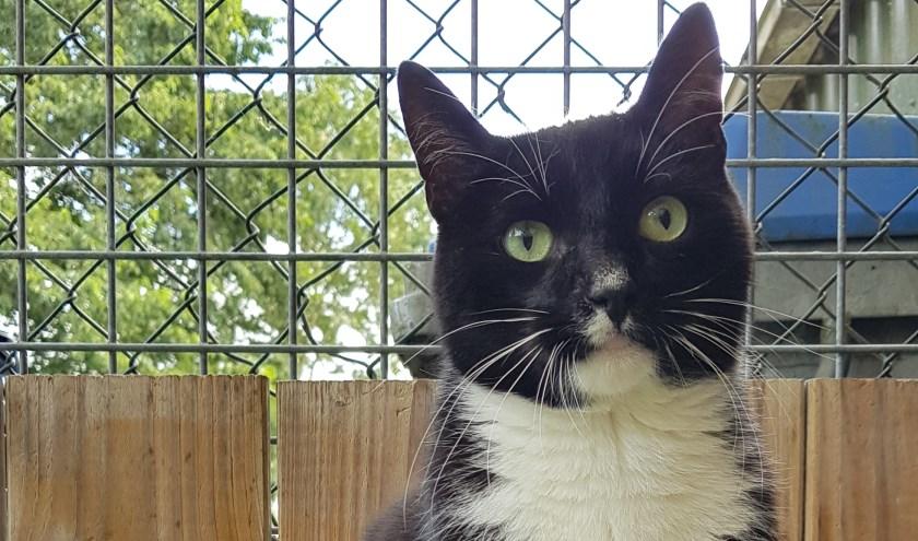 Elke week zet Dierenopvangtehuis De Bommelerwaard een dier in het zonnetje. Deze week is dat Ziggy. Kijk voor meer informatie op www.dierenasiel-bommelerwaard.nl.