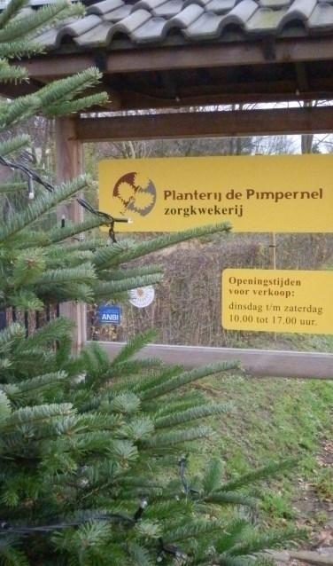 Bij Planterij de Pimpernel kunnen inwoners een kerstboom doneren aan de Voedselbank.