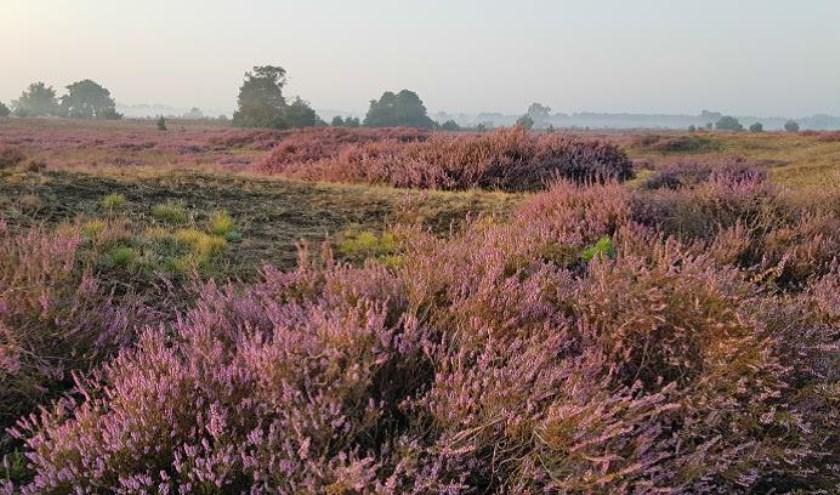 De Groote Heide in Heeze-Leende.