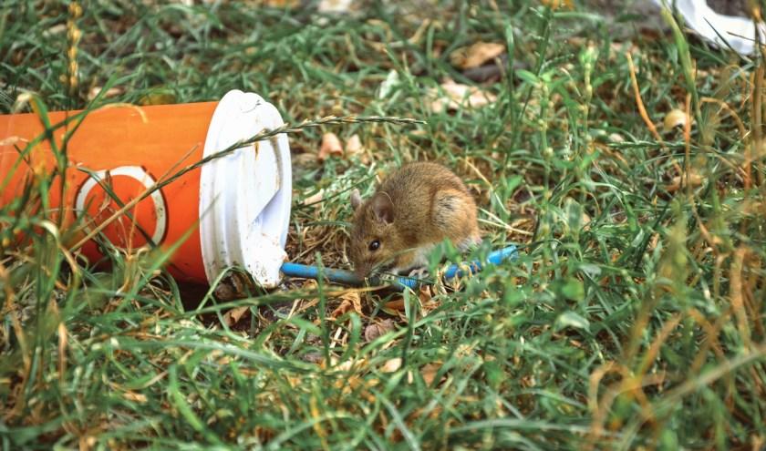 Een muis knaagt aan zwerfafval
